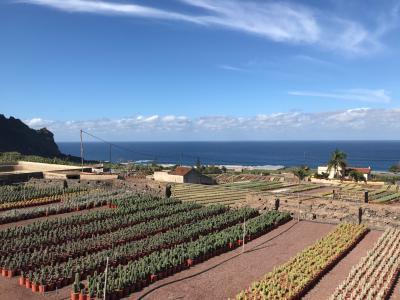 Cacti from Tenerife