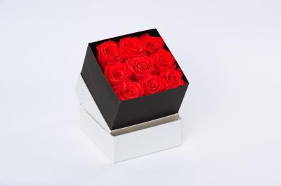 flobox Prestige Rote Rosen